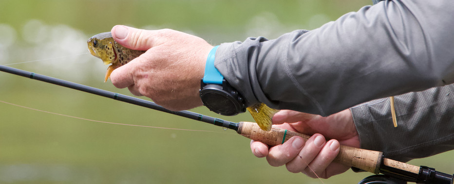 fish-in-hand.jpg
