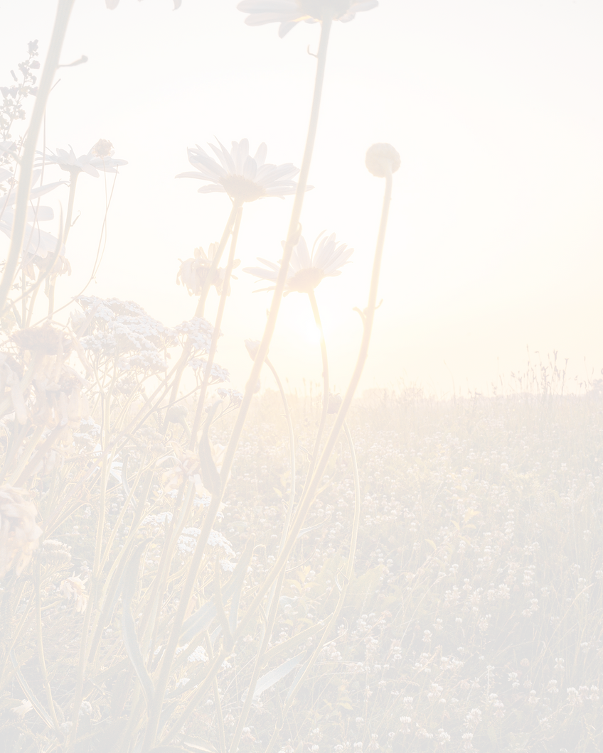 sunrise-on-a-flower-field-2792077_edited
