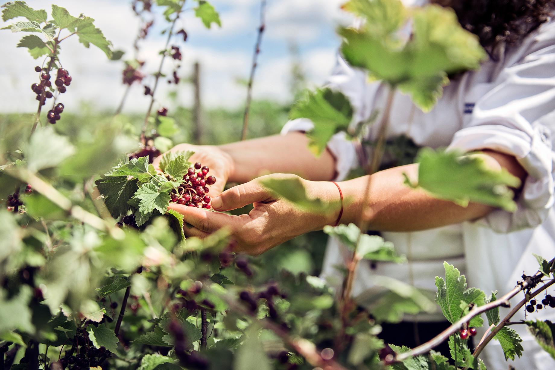 chr. H. Jordbær-66.jpg