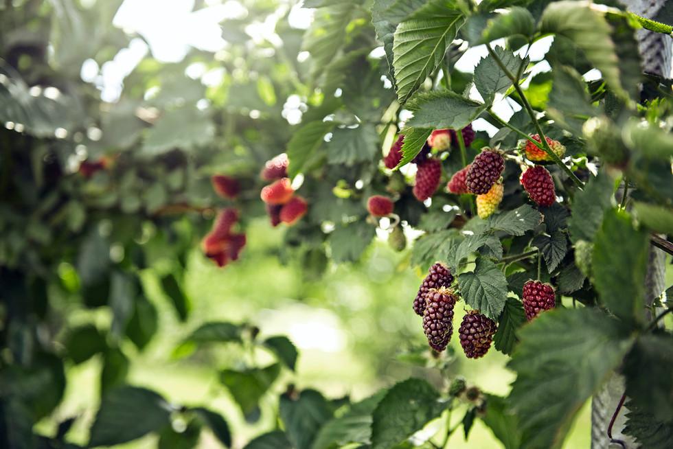 chr. H. Jordbær-89.jpg
