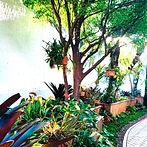 Plantas e Árvores - Idéia Verde