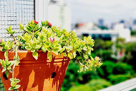 6. Arquitetura do Verde