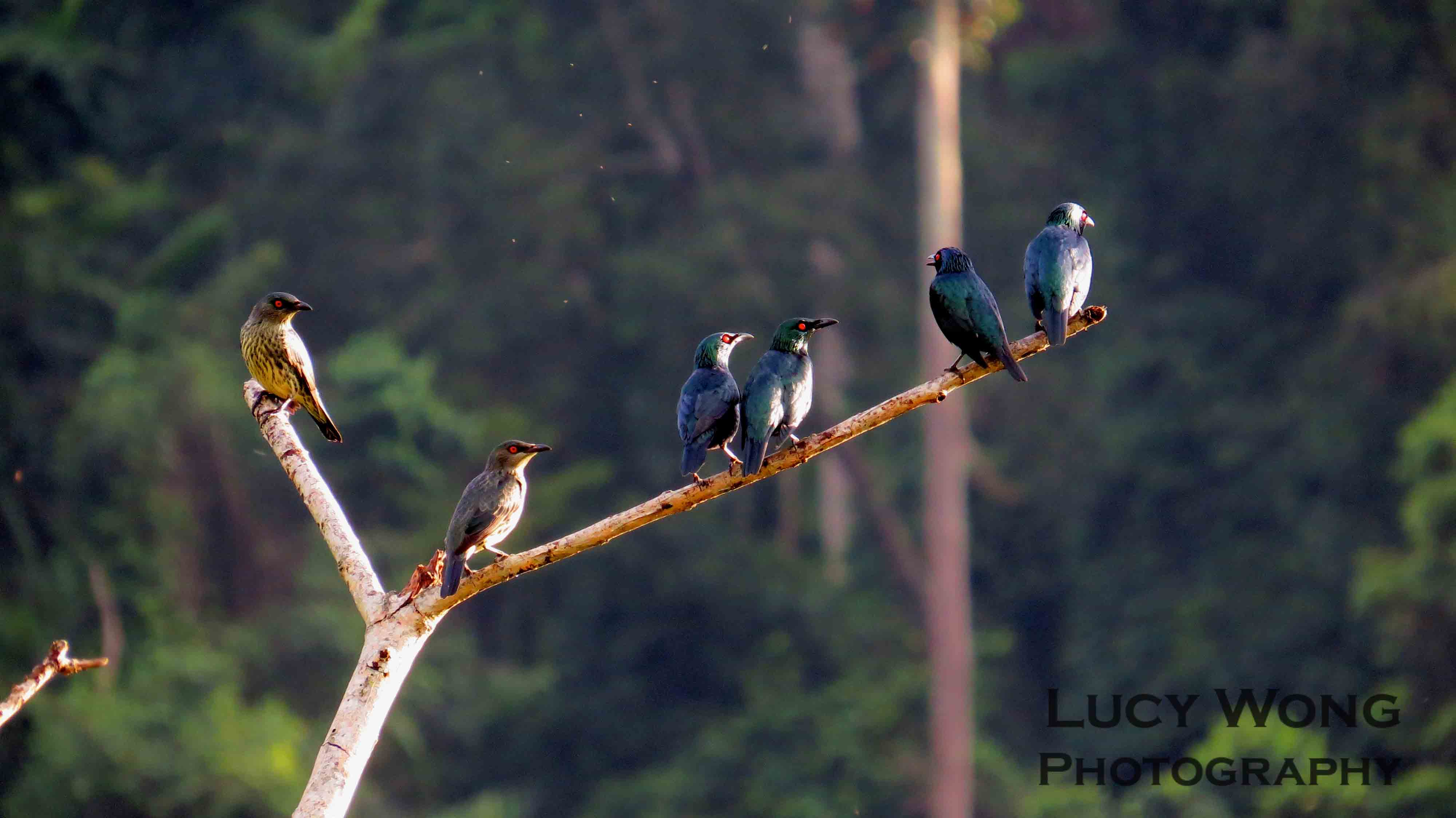 Group of Starlings