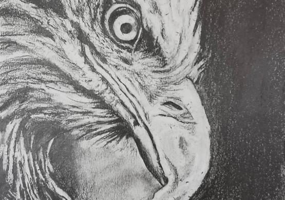 Adler (2020)