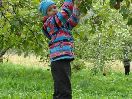 Des belles pommes