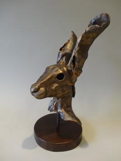 Hare 1 008