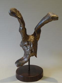Hare 1 014