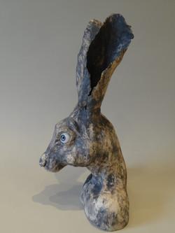 Hare 1 030