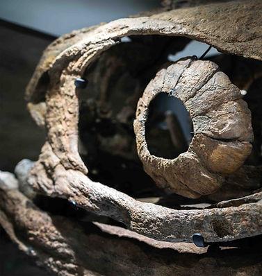 Ichtyosuarus Granada Gallery Dinosaurs