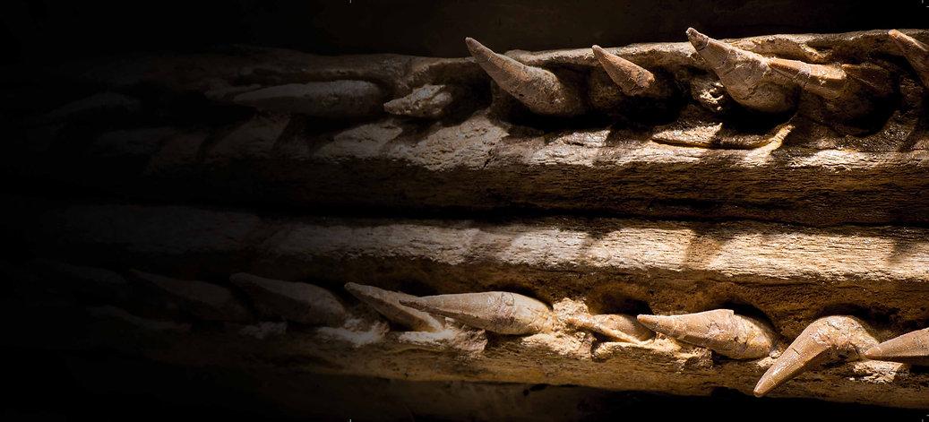 Crocodile Fossil Granada Gallery