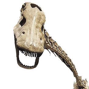 Supersaurus Dinosaur Granada Gallery