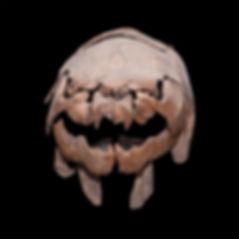 Dunkleosteus web LR.jpg