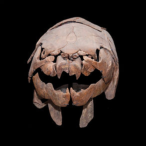 Dunkleosteus Dinosaur Granada Gallery