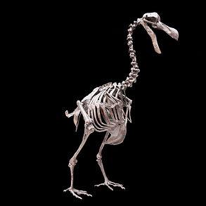 Dodo DinosaurGranada Gallery