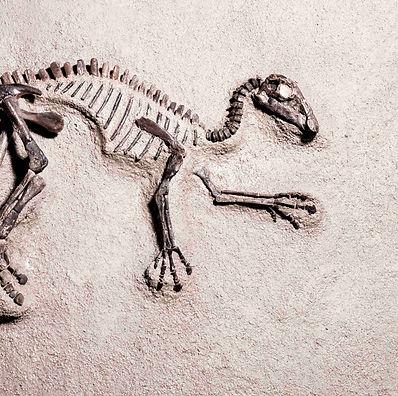 Maiasaurus Granada Gallery Dinosaurs