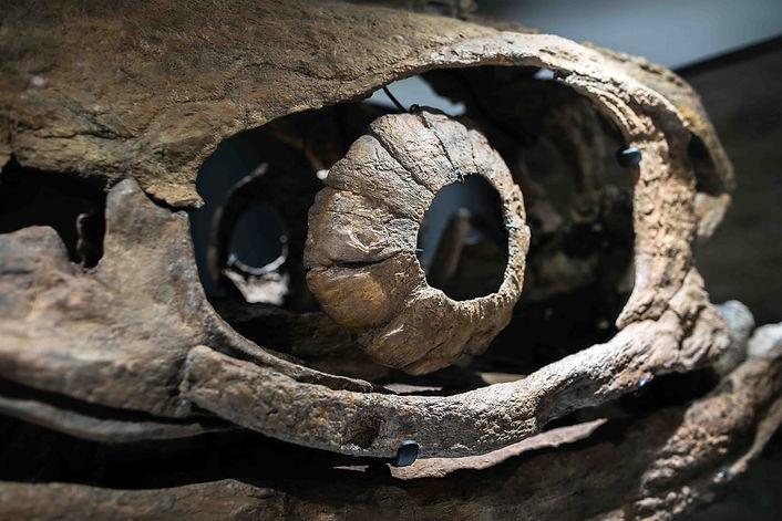 Ichtyosuarus Dinosaur Granada Gallery