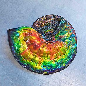 Ammolite Fossil Gemstone Granada Gallery Fossil Gemstone