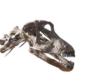 Diplodocus Dinosaur Granada Gallery