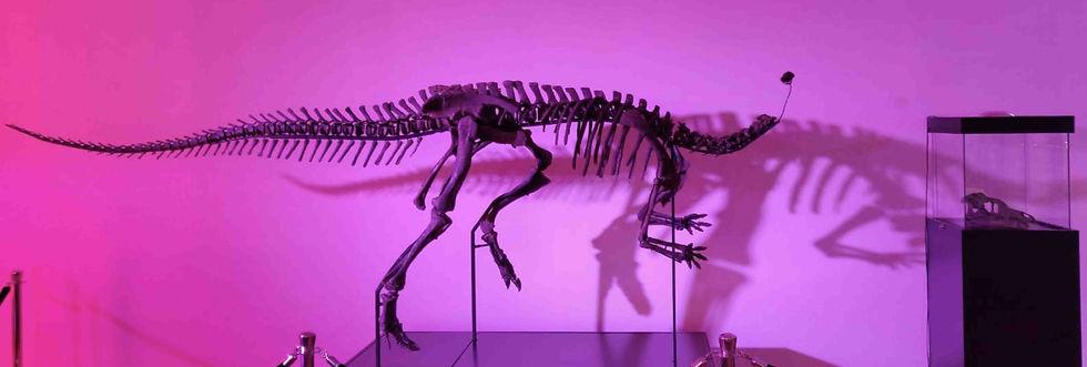 Camptosaurus Granada Gallery