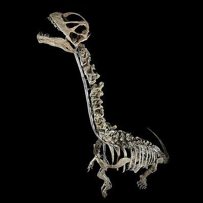 Camarasaurus Granada Gallery Dinosaurs