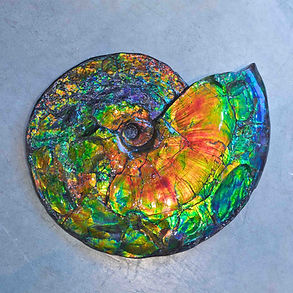 Ammolite Granada Gallery Fossil Gemstone