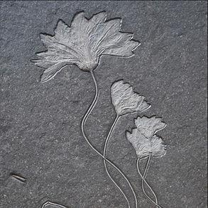 Lily Fossil Granada Gallery