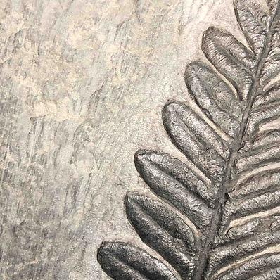 Plant Fossil Granada Gallery
