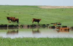 Ranching drives Local Incomes