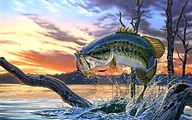 Bass Fishing - Grand Lake