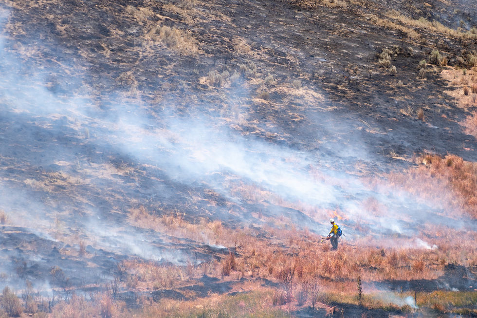 """One crewmember uses a drip torch to ignite fires inside the """"black,"""" the already-burned area, to burn off any remaining hazardous fuel at the Miller Flats fire on July 7, 2021.  The fire grew to only about 100 acres before the various crews, including the Rangeland Fire Protection Association, successfully contained it with a combination of all they had learned in training. Everyone at the scene played a role; the engine crews used their hoses and hand tools to contain the fire to a workable perimeter, the Helitack crew dropped water from helicopters and fire retardant from airtankers, and the heavy equipment crew used bulldozers to clear paths and uproot anything flammable at the perimeter of the fire."""