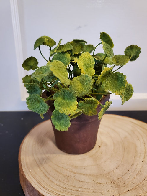 Potted Green Foliage