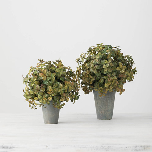 Small Boxwood Topiary