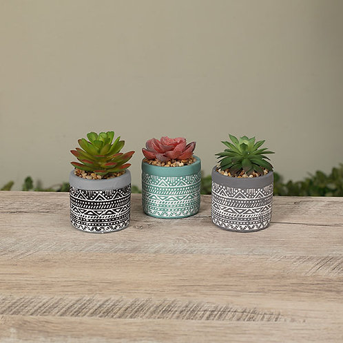 """3.5"""" Potted Succulent"""