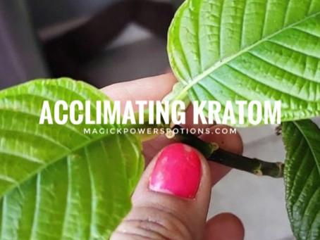 Acclimating Kratom