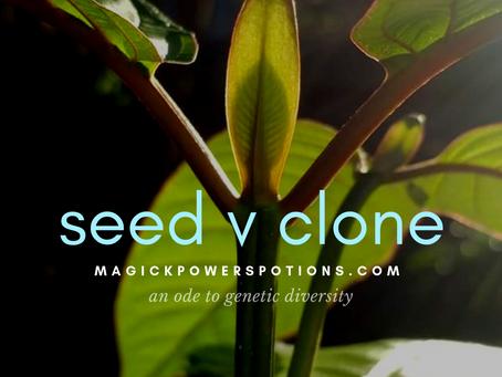 Seed-Sown vs Clone Kratom