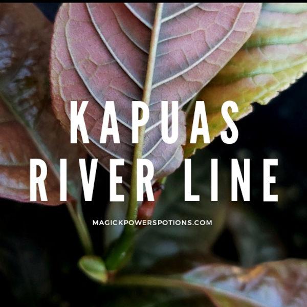 kapuas river line - seed sown kratom gen