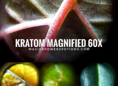 Kratom at 60x magnification
