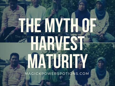 Kratom Harvest Maturity