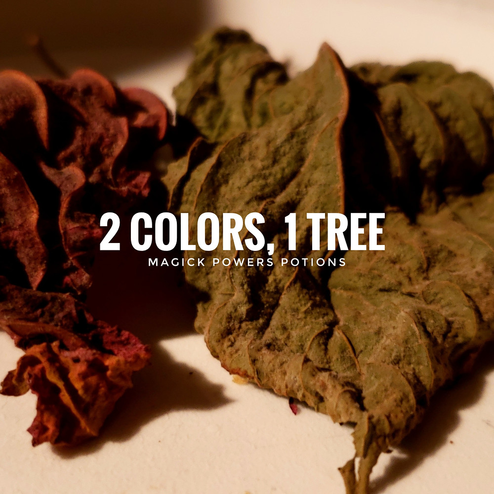 These leaves were both green on the tree. They were cured differently to create different colors and effects.