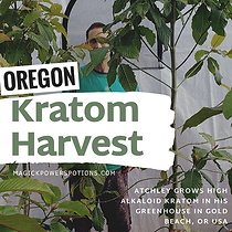 oregon kratom harvest - magick powers po