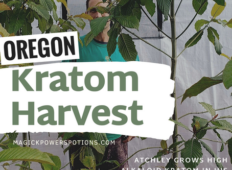 Oregon Kratom Harvest