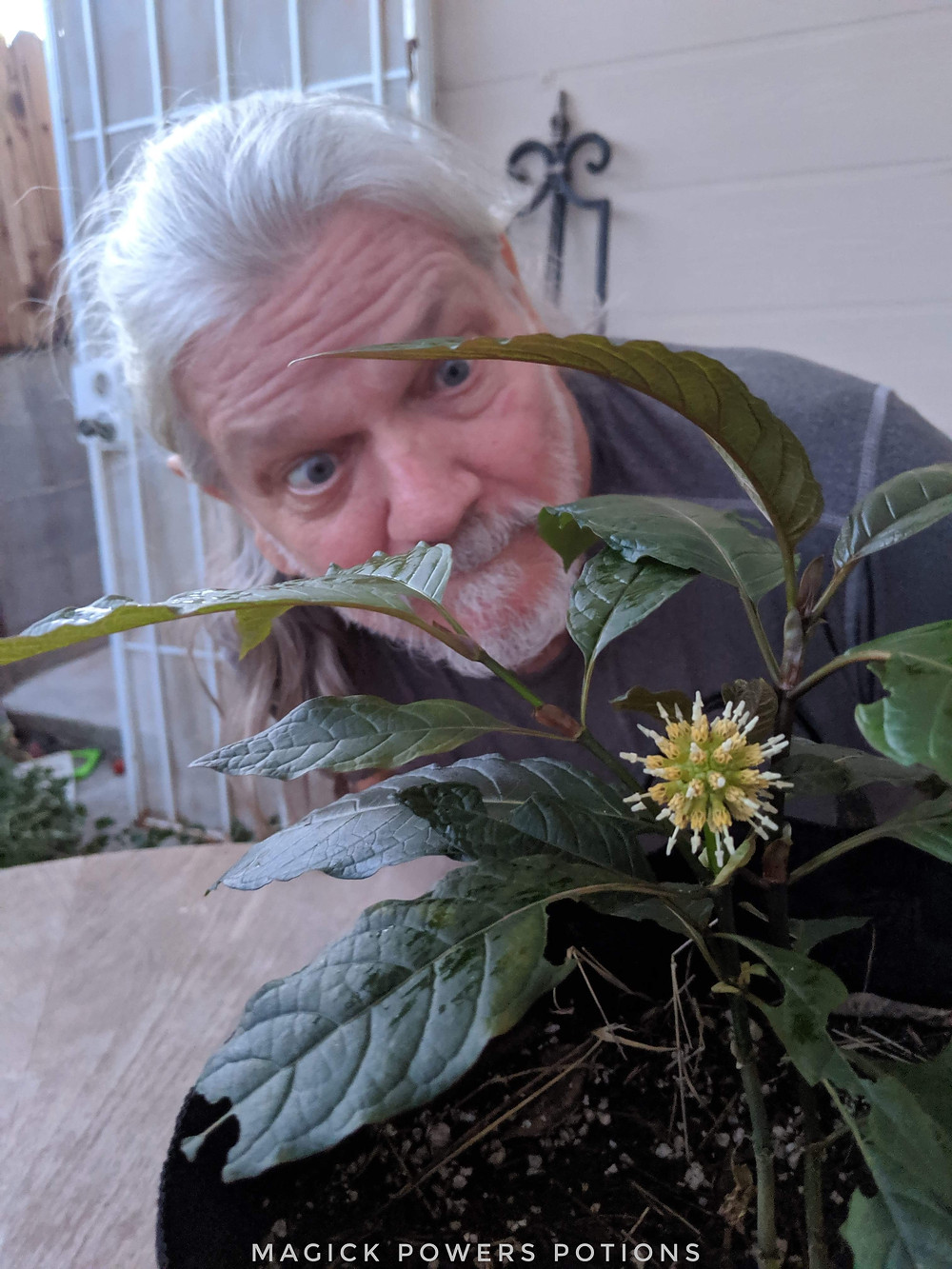 Glenn Bradford got a special blessing from the kratom gods when one of his purchases began growing an incredibly rare flower/seed pod.