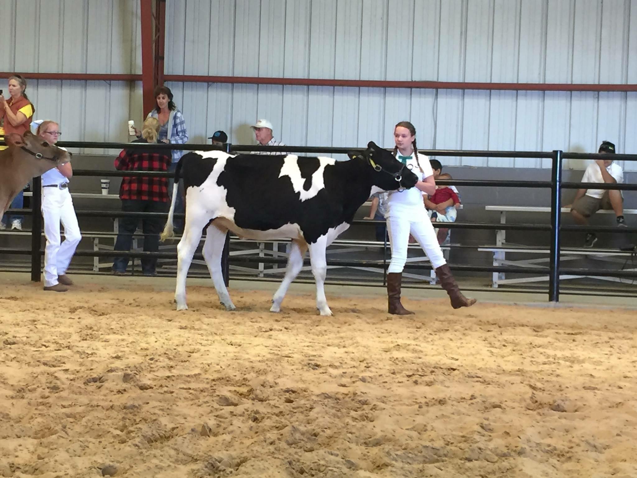 Cow Show Fair