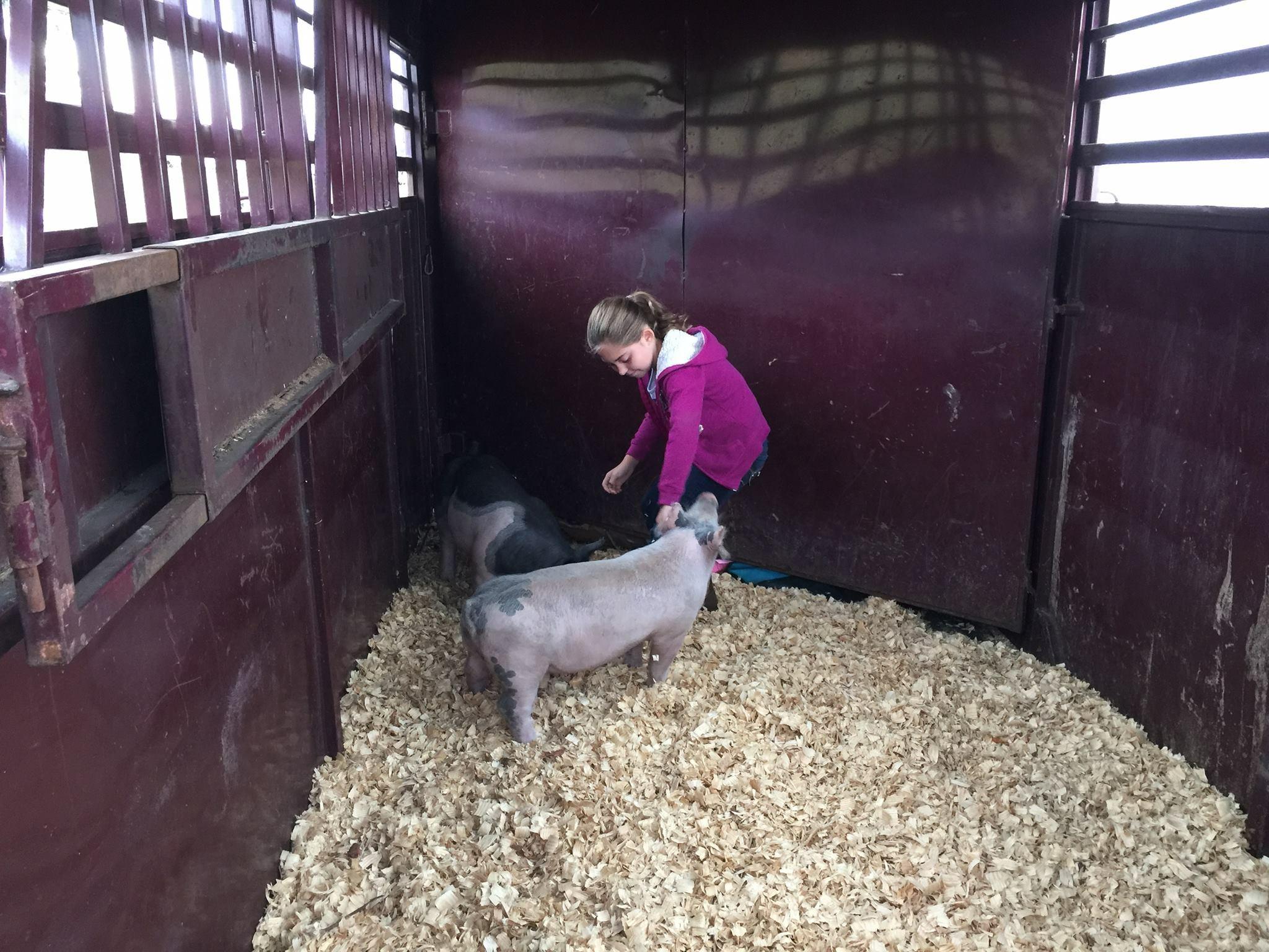 Hog Care