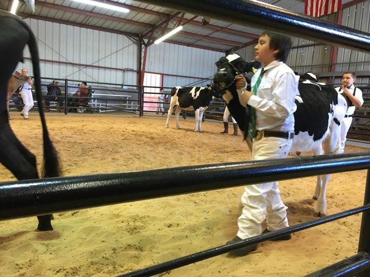 Cow Show