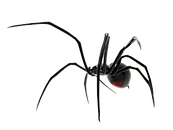 Spider-PNG-Image_edited.png