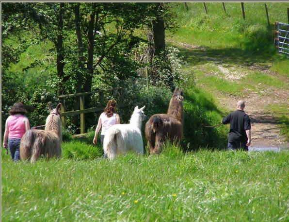 treks@llamaadventures.co.uk