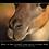 Thumbnail: Adopt a Llama Gift Box