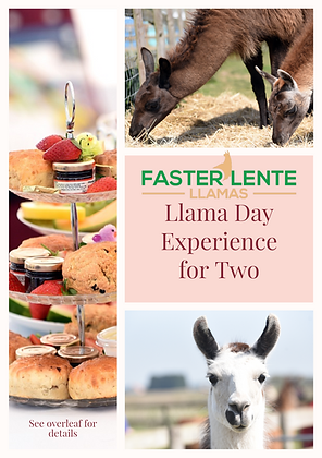 Luxurious Llama Day Experience and Cream Tea for Two