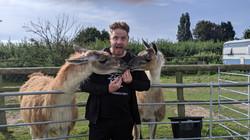 Llamas love treats